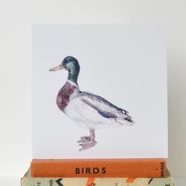 Male Mallard duck greetings card